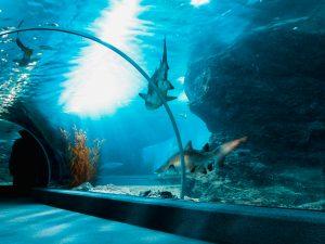 Gatlinburg Aquarium