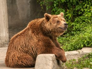 ZooAmerica | Hershey